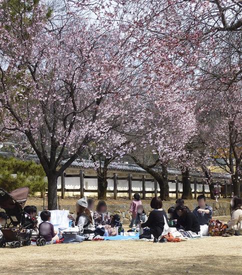 3月のイベント(お花見)