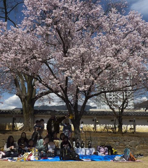 4月のイベント(お花見)